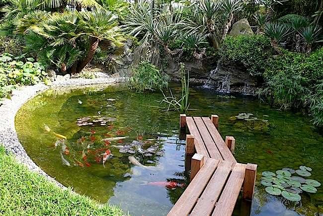 Quand nettoyer un bassin de jardin?